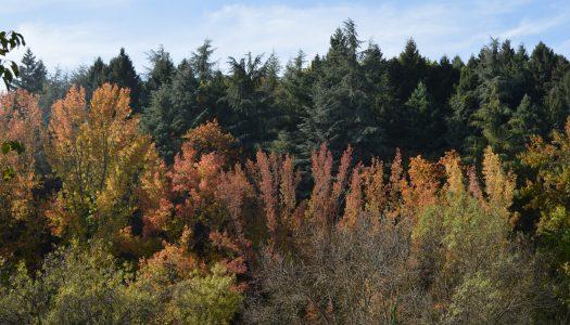 Outono: o festival das cores