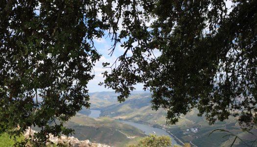 Mirar o Douro