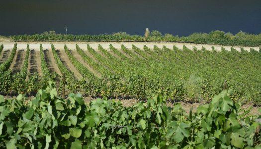 Rede de Investigação e Experimentação da Vinha e do Vinho do Douro vai ficar sediada na UTAD