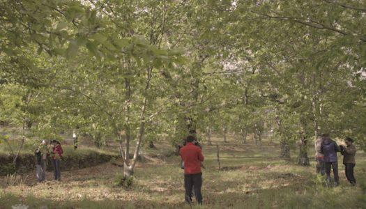 Municípo de Vila Real implementa protocolo contra praga da Vespa das Galhas do Castanheiro
