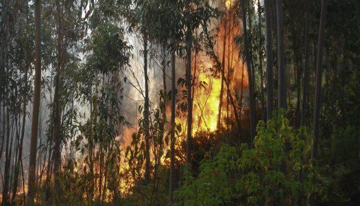Distrito de Vila Real com três ocorrências de incêndio