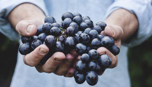 Engaço da uva aproveitado em creme anti-rugas