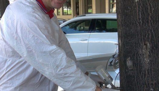 UTAD no combate a pragas nas árvores de Vila Real